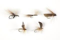 Pesca della mosca Immagine Stock Libera da Diritti