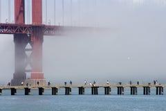 Pesca della nebbia Immagini Stock