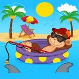 Pesca della scimmia sul mare Fotografie Stock