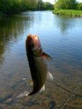 Pesca della trota Immagini Stock