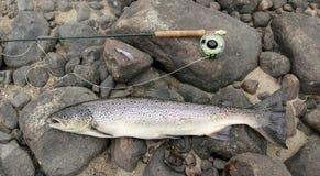 Pesca di color salmone Fotografie Stock