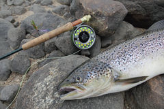 Pesca di color salmone Immagini Stock