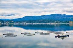 Pesca di color salmone dell'azienda agricola Fotografia Stock Libera da Diritti