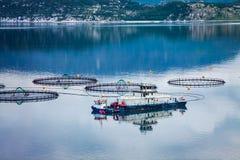 Pesca di color salmone dell'azienda agricola Fotografia Stock
