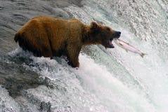 Pesca di color salmone dell'orso in Katmai Fotografia Stock Libera da Diritti
