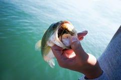 pesca di finezza Fotografia Stock