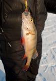 Pesca di inverno. Immagini Stock Libere da Diritti