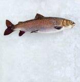 Pesca di inverno. Fotografia Stock