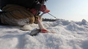 Pesca di inverno video d archivio