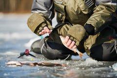 Pesca di inverno sul ghiaccio Fermo di pesce del triotto in mani del pescatore o del pescatore fotografia stock libera da diritti