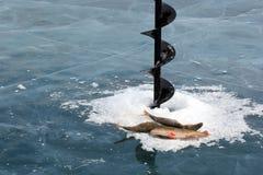 Pesca di inverno sul ghiaccio pulito del lago Baikal Fotografie Stock Libere da Diritti