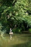 Pesca di Little Boy dal bordo del bacino di legno Immagine Stock Libera da Diritti