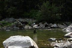 Pesca di mosca nel Montana Fotografia Stock
