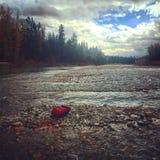 Pesca di vista del fiume fotografia stock