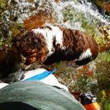 Pesca do cão Foto de Stock Royalty Free