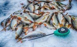 Pesca do gelo do esporte de inverno Imagens de Stock Royalty Free