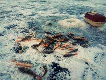 Pesca do gelo no gelo Fotografia de Stock