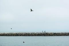 Pesca do molhe Foto de Stock