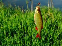 Pesca en el lago Fotos de archivo