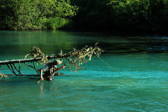 Pesca en el lago del cheakamus Fotos de archivo