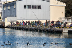 Pesca en el puerto marítimo de Sochi Rusia Fotos de archivo libres de regalías