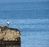 Pesca en mar en rocas Fotos de archivo