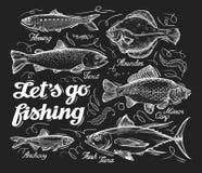 pesca Entregue peixes tirados do esboço, arenques, truta, solha, carpa, atum, arenque pequeno Ilustração do vetor ilustração royalty free