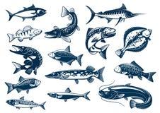 Pesca iconos aislados vector de la especie Foto de archivo libre de regalías