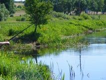Pesca no lago em Bielorrússia com varas de pesca Fotografia de Stock