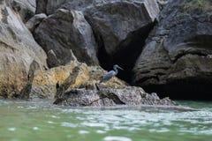 Pesca para el almuerzo Fotografía de archivo