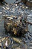 Pesca para fora Imagens de Stock