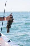 Pesca para o Tautog no barco imagens de stock