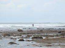 Pesca para su cena Playa Esterillos Costa Rica Fotografía de archivo