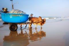 Pesca por um dia novo Fotografia de Stock Royalty Free