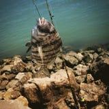 Pesca principal de las ovejas Imagenes de archivo