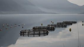 Pesca salmon da exploração agrícola filme