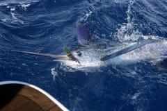 Pesca sportiva atlantica del gran gioco del marlin bianco fotografia stock