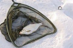 Pesca sul ghiaccio Immagini Stock
