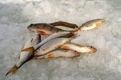Pesca sul ghiaccio della primavera Immagine Stock Libera da Diritti