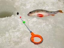 Pesca sul ghiaccio in Russia Fotografia Stock Libera da Diritti