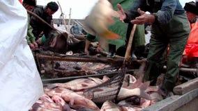 Pesca tradizionale stock footage