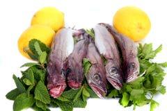 Pescadas novas Fotos de Stock