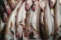 Pescadas um bacalhau fotografia de stock