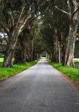 Путь к раю стоковые изображения