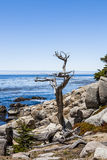 Pescadero Point at 17 Mile Drive in Big Sur California Stock Photos