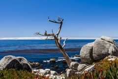 Pescadero Point at 17 Mile Drive in Big Sur California Stock Photography