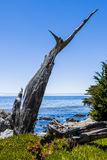 Pescadero Point at 17 Mile Drive in Big Sur California Stock Image