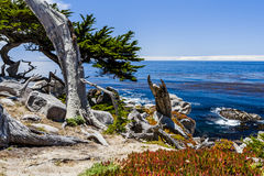 Pescadero Point at 17 Mile Drive in Big Sur California. Pescadero Point, 17 Mile Drive, Big Sur, California, USA - July 1, 2012: The 17 Mile Drive is a scenic Royalty Free Stock Photography