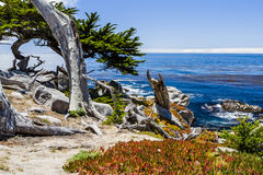 Pescadero-Punkt bei einem 17 Meilen-Antrieb in Big Sur Kalifornien Lizenzfreie Stockfotografie