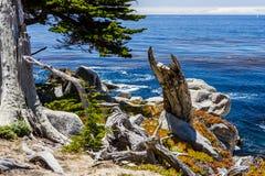 Pescadero-Punkt bei einem 17 Meilen-Antrieb in Big Sur Kalifornien Stockfotografie